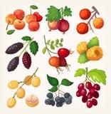 Sappige kleurrijke bessenpictogrammen stock illustratie