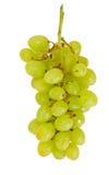Sappige Rijpe die Druiven op Witte Achtergrond worden geïsoleerd Stock Afbeelding