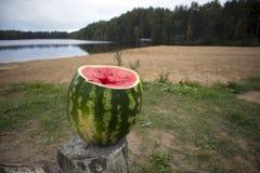 Sappige rijpe ingekerfte watermeloen die zich op een rotte stomp bevinden stock foto