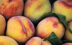 Sappige, rijpe perziken als achtergrond Stock Afbeelding