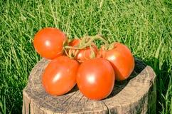 Sappige Rijpe Tomaat Stock Foto