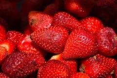 Sappige rode aardbeien op een hete dag Stock Afbeeldingen