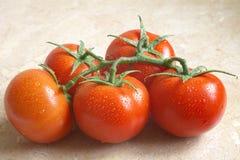 Sappige tomaten Royalty-vrije Stock Afbeeldingen