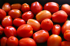 Sappige tomaten klaar voor het roosteren om passata te maken Royalty-vrije Stock Afbeelding