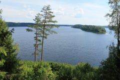Sapsho το καλοκαίρι Στοκ εικόνα με δικαίωμα ελεύθερης χρήσης