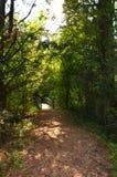 Sapsucker drewien drewna ścieżki i drewno most zdjęcie royalty free