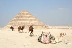 Saqqara, Egitto Fotografia Stock