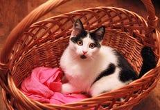 Sara magiczny kota narządzanie dla zimy Zdjęcie Stock