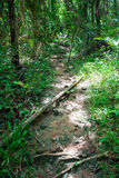 Saraburee skog royaltyfri fotografi