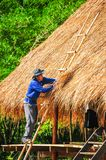 Man with blue shiet standing on bamboo stairs making thatch roof. Saraburi, Thailand - June 4, 2012: Man with blue shiet standing on bamboo stairs making thatch stock photos