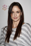Sarah Wayne Callies Stockfotos