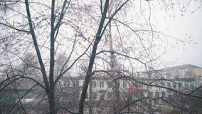 Saraivar as folhas verdes pequenas cobertos de neve de ?rvores de congela??o filme