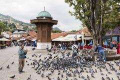 Sarajevo, Bosnië - Herzegovina, 16 Juli 2017: De mens voedt duiven in Sarajevo Royalty-vrije Stock Afbeelding