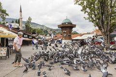 Sarajevo, Bosnien Herzegovina, am 16. Juli 2017: Frau zieht Tauben ein Lizenzfreies Stockbild