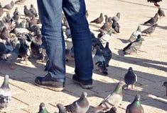 Sarajevo, l'Europe 09 02 2018, homme se tenant en trottoir de pavé rond de place de ville avec des pigeons autour de ses jambes Images stock
