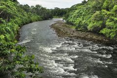 The Sarapiquí river flows through the Tirimbina Biological Reserve in Costa Rica. stock image