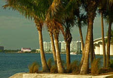 Sarasota from Bird Key. A photograph of the waterfront of Sarasota Florida and the Ringling Causeway across Sarasota Bay through the palm trees on Bird Key Stock Photo