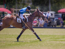 Sarasota Polo Club in action. LAKEWOOD RANCH, SARASOTA, FLORIDA - MARCH 18-Rider of M and I Wealth Management-Wildcat Polo prepares to score a goal at the MGA stock photography
