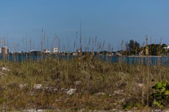 Sarasota-Skyline durch das Gras Lizenzfreies Stockfoto