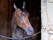 Saratoga die Backstretch-Stallen rennen royalty-vrije stock afbeeldingen