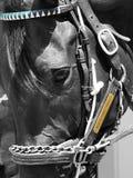 Saratoga die Bill Mott Runner rennen royalty-vrije stock fotografie