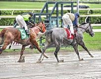 Saratoga het Rennen Foto's stock afbeeldingen