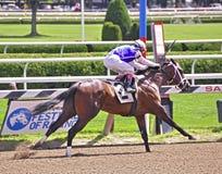 Saratoga het Rennen Foto's Enquette royalty-vrije stock afbeeldingen