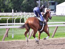 Saratoga Morning Workouts - Todd Pletcher Stables stock images