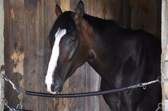 Saratoga Racing Backstretch Stables `Lake Effect` royalty free stock photography