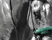 Saratoga som springer Backstretchstall royaltyfri fotografi