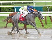 Saratoga Volbloed- het Rennen Foto's royalty-vrije stock foto