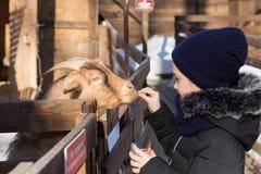 Saratov/Rusland - Maart 10, 2018: Het meisje voedt de geit in de dierentuin royalty-vrije stock fotografie