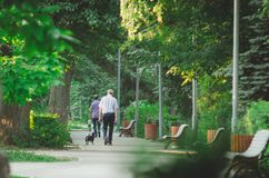 A man is walking with a dog in the City Park in the morning royalty free stock photography