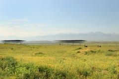 Sarazm, Tajiquistão foto de stock