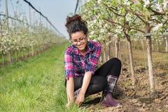 Sarchiatura della ragazza dell'agricoltore intorno agli alberi da frutto Fotografia Stock Libera da Diritti