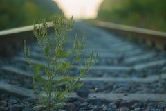 sarclez au chemin de fer près des lignes électriques à haute tension au ciel dramatique image libre de droits