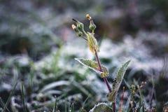 Sarclez dans le jardin, couvert d'automne de gel tard, le premier f images libres de droits