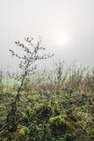 Sarclez dans le terrain pendant le matin avec la rosée photographie stock