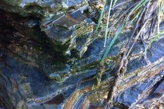 Sarclez l'élevage près des pierres, herbe de champ photographie stock libre de droits