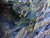 Sarclez l'élevage près des pierres, pierres humides photos stock