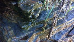 Sarclez l'élevage près des pierres, des pierres humides et de l'herbe de champ photographie stock libre de droits