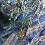Sarclez l'élevage près des pierres, des pierres humides et de l'herbe de champ photos stock
