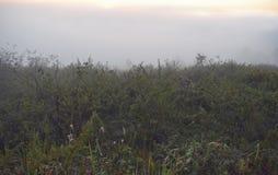 Sarclez l'herbe, le pré avec la détente au matin et l'air frais, la partie 7 de liberté image stock