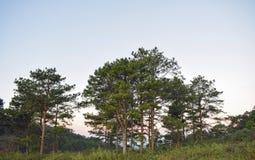Sarclez l'herbe, le pré avec la détente au matin et l'air frais, la partie 8 de liberté images libres de droits