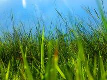 Sarclez l'herbe qui est encombr?e ? la ferme sur le fond de ciel photos stock