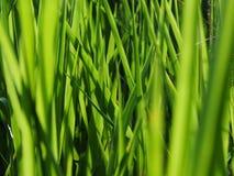 Sarclez l'herbe qui est encombr?e ? la ferme sur le fond de ciel photo libre de droits