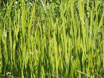 Sarclez l'herbe qui est encombr?e ? la ferme sur le fond de ciel photographie stock libre de droits
