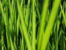 Sarclez l'herbe qui est encombr?e ? la ferme sur le fond de ciel photo stock
