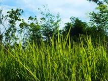 Sarclez l'herbe qui est encombr?e ? la ferme sur le fond de ciel images libres de droits
