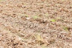 Sarclez l'herbe sur la terre cultivée par terre de sol sec image stock